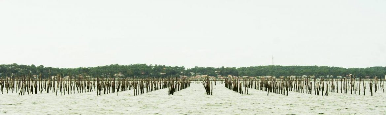 Bassin d'Arcachon Lignes