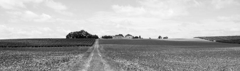 Castelnau-de-Montmiral-Champs-et-vignes
