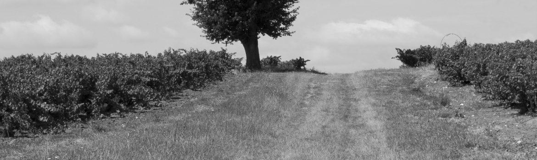 Castelnau-de-Montmiral-Chemin