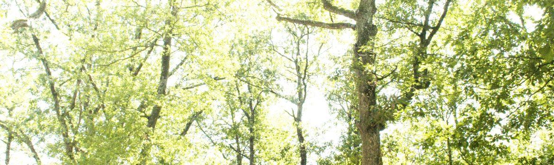 Clairière Forêt de Bouconne-31