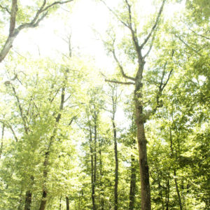 Clairière – Forêt de Bouconne (Haute-Garonne) 40x60cm