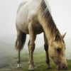 Un cheval au bord du Lac de Gaube