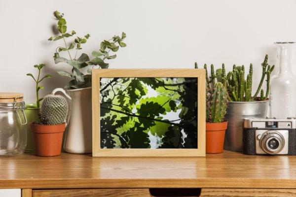 Feuilles de chênes-présentation dans cadre bois horizontal